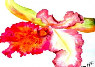 orchidée par Fanny LAFFITTE