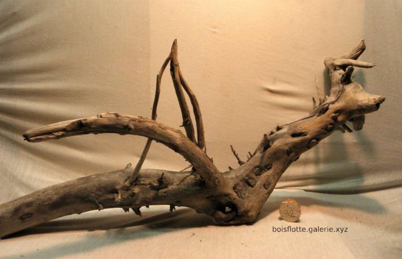 Bois flotté n°32 - 102 cm